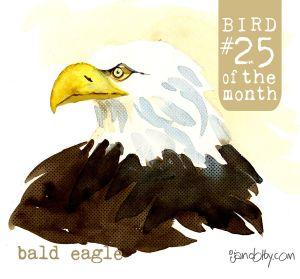 number-bird-25be.jpg