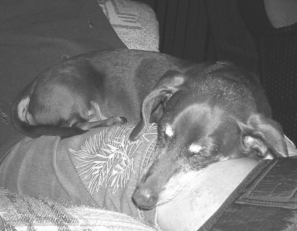 my Rhoda dog…