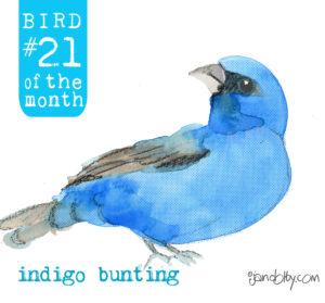 number-bird-21